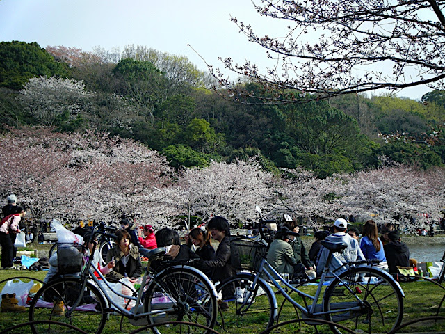 Sakura Viewing in Akashi Castle Park