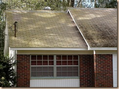 Tampa Roof Cleaning 002