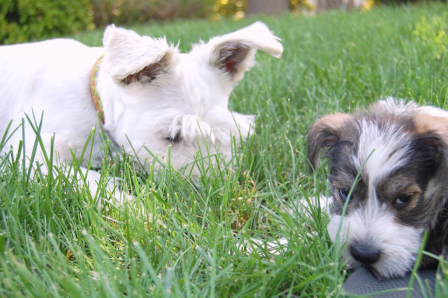 On the first day, they were all ready playing in our grass.