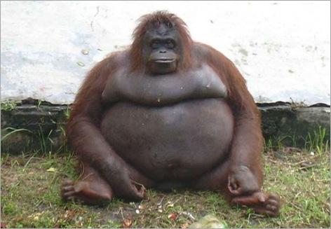 Fat_animals07