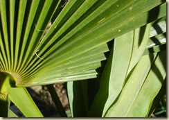 woven palm leaves_1_1_1