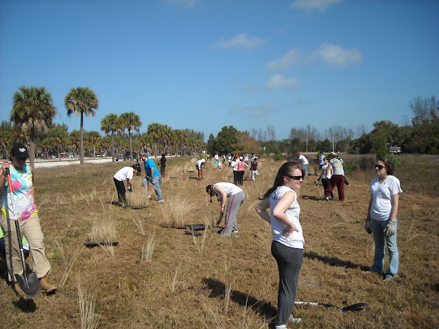 Planting for the Tampa Bay Watch