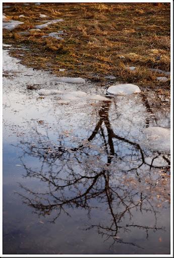 Tree Reflection V