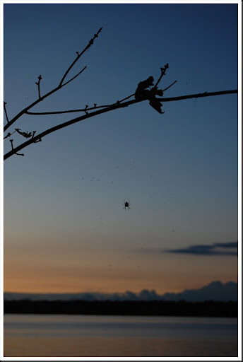 river sunset spider