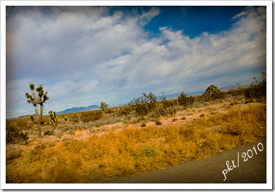 DSC_004Joshua-tree-from-moving-car