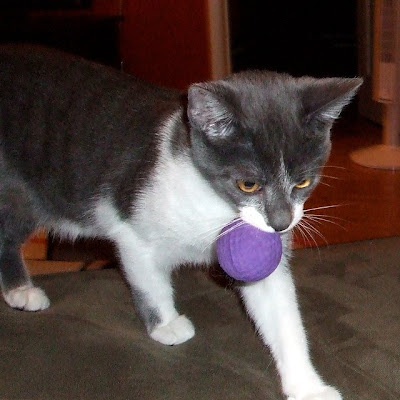 Oslo and his purple ball.