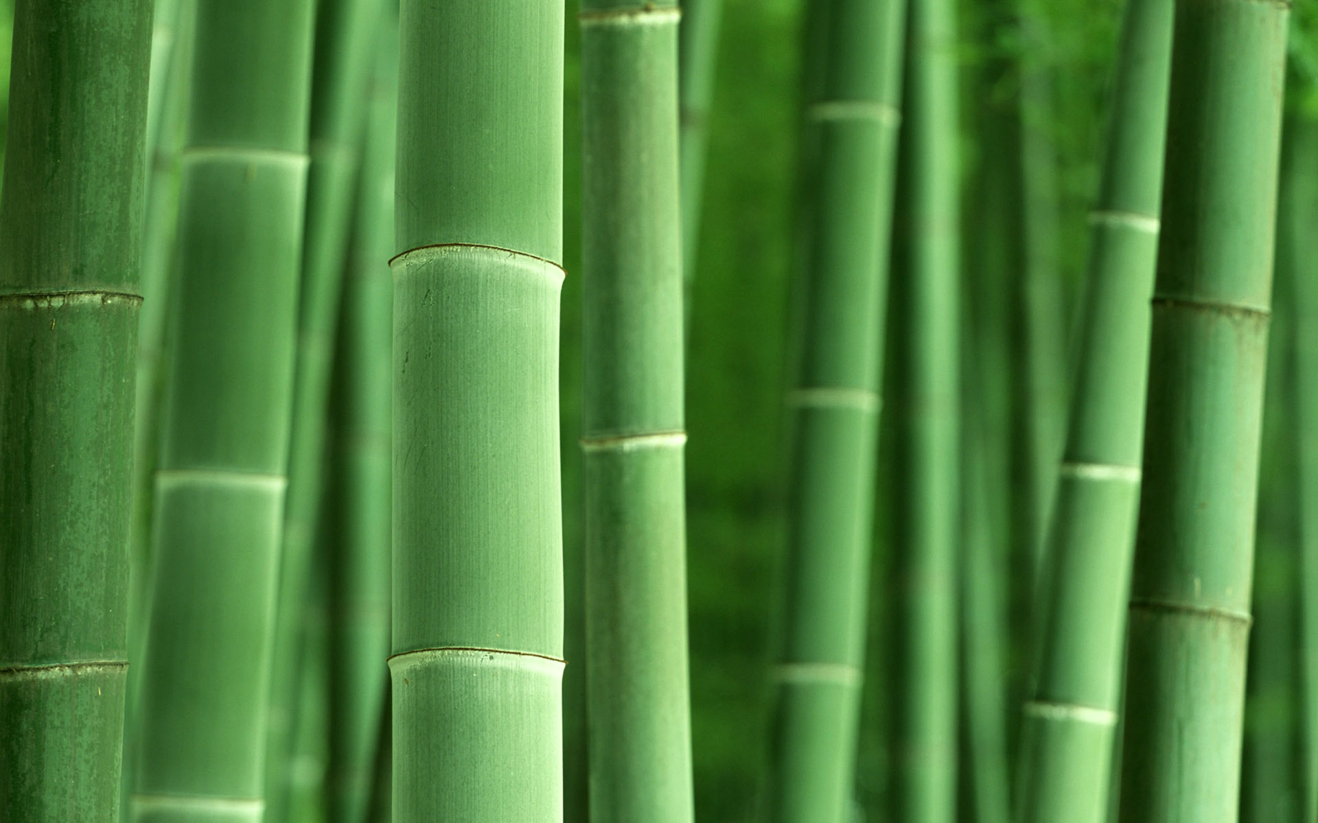 Amazing Bamboo Wallpapers