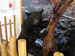 く、熊!くま!クマ!