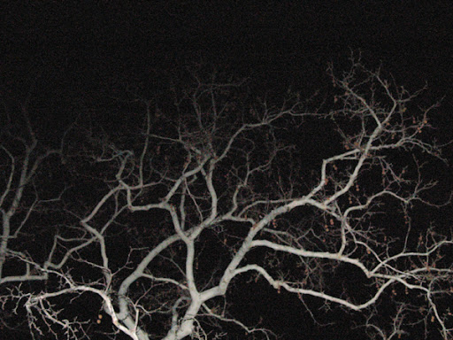 Sycamore at Night by Lauraven