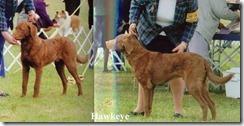 Hawk at 7 months