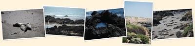 View Sea Lions on RT 1 - Coast of California