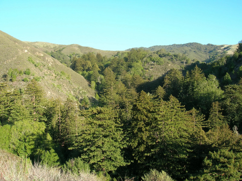 Soberanes Canyon
