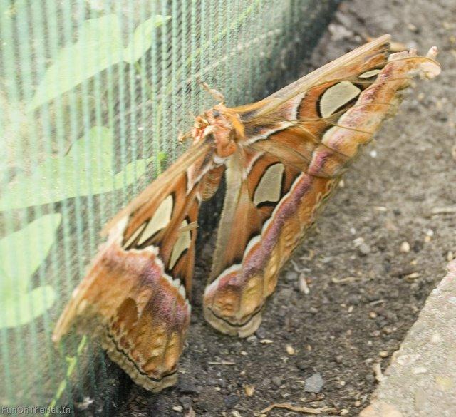 LargestButterfly