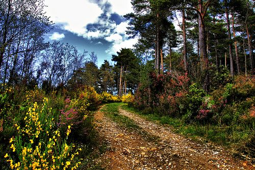 El pinar de La Pola de Gordón (León).- Foto de Alfredo G. Álvarez