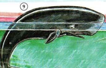 9. Baleine
