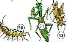 50. centipede 51. praying mantis 52. cricket