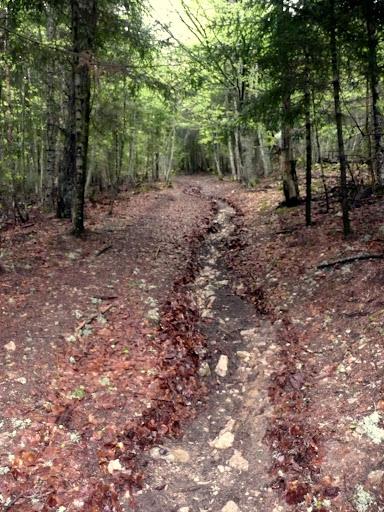 Lindo sendero de hojas