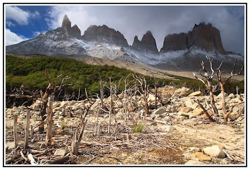 The Burned Forest Clearing, Valle de Frances