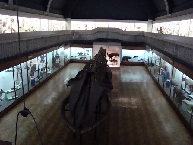 """Muzeum Przyrodnicze we Wrocławiu - sala """"Świat zwierząt"""""""