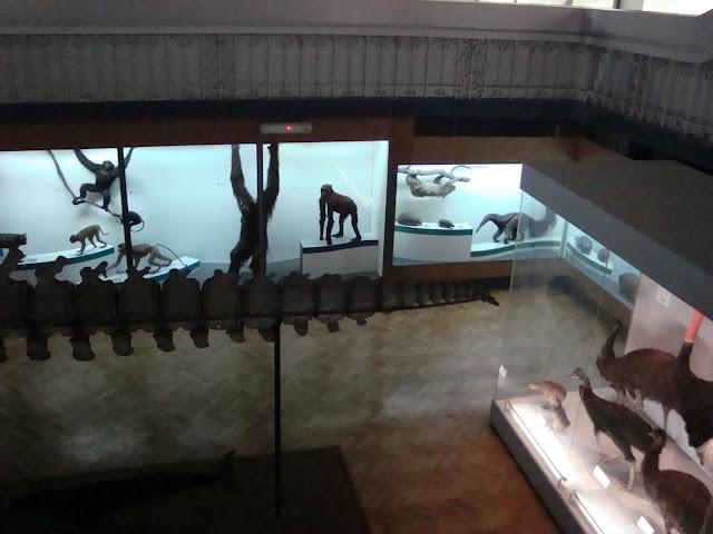 """Widok z galerii na piętrze na parter sali """"Świat zwierząt"""""""