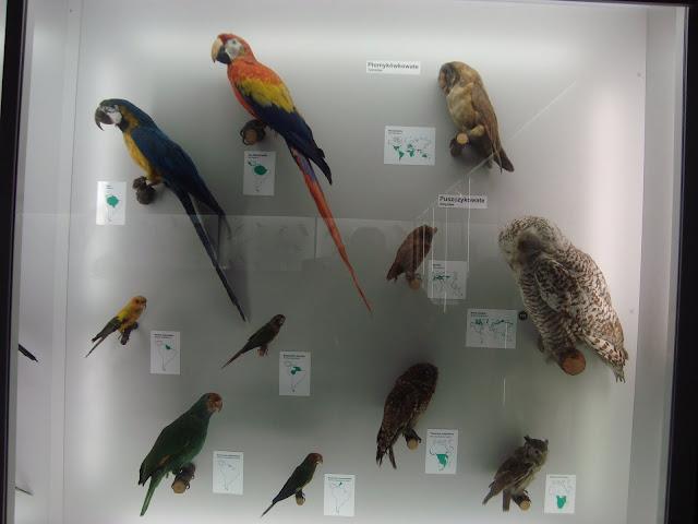 Muzeum Przyrodnicze we Wrocławiu - Sowy i papugi
