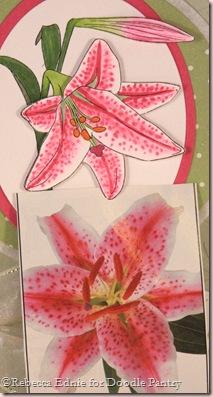stargazer lily closeup
