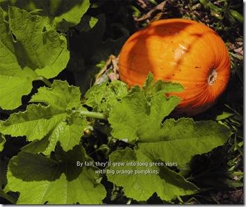 Garden p.23