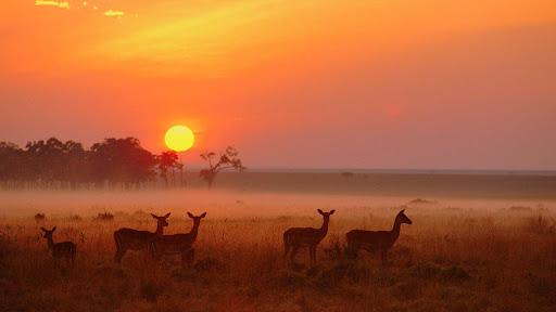 https://i2.wp.com/lh3.ggpht.com/_z3vj-KK8S8s/R1zEM5qje6I/AAAAAAAADoA/K0Yt-hMn-Yo/Impala+Herd+at+Dawn,+Masai+Mara+National+Reserve,+Kenya.jpg