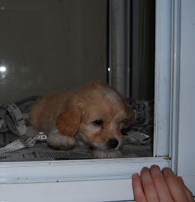 Corfu Greece puppy dog pet store