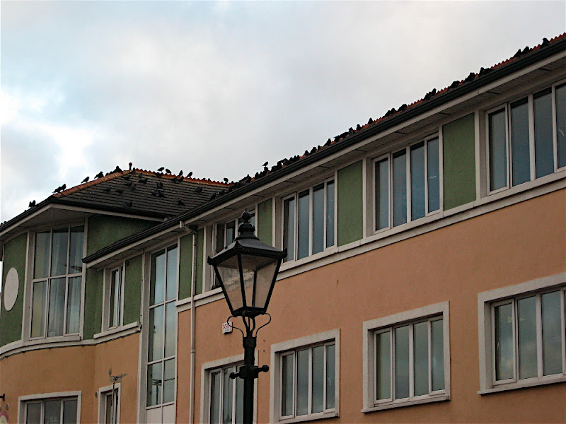 Da crows