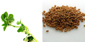 Fenugreek leaves/seeds – Glossary – help when stuck with ...