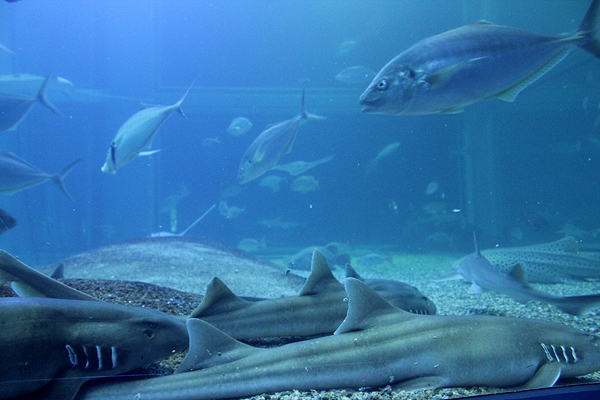 top attractions in osaka, things to do and see in osaka, osaka aquarium, deep sea fish,