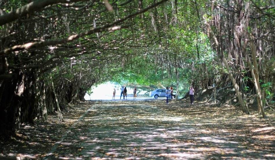 長勝營區綠色隧道-1
