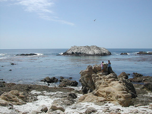 Montery Bay Aquarium, USA - 207779743_c7dc98cd6e.jpg