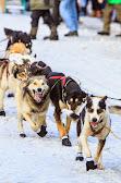 Iditarod2015_0163.JPG