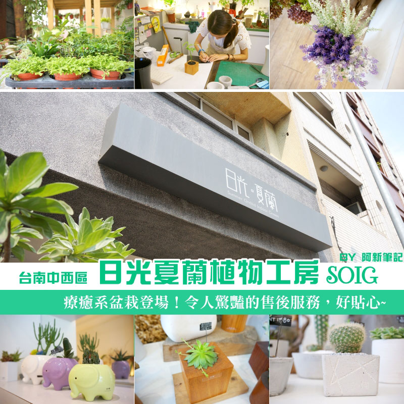 台南盆栽店,日光夏蘭植物工房