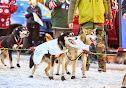 Iditarod2015_0375.JPG