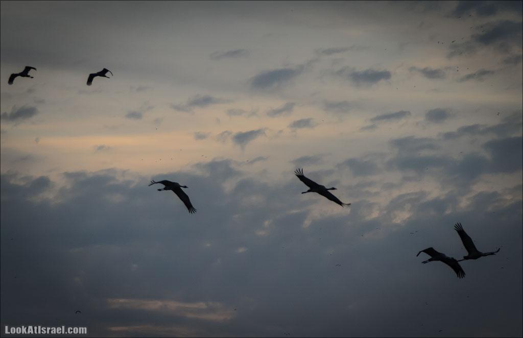 Озеро Хула на рассвете | LookAtIsrael.com - Фотографии Израиля и не только...