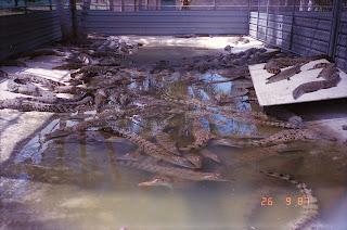 2150NT Croc Farm