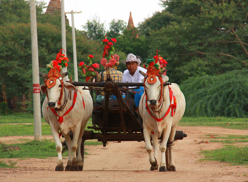 On your bagan travel you can experience a bullock cart or horse cart ride