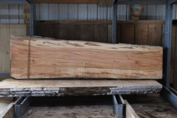 "567  Maple Ambrosia -6 10/4x 35"" x 27"" Wide x  10'  Long"