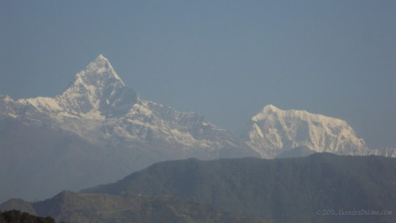 Pride held high as the Himalayas - can you spot the tiger in the Machhapuchhre?