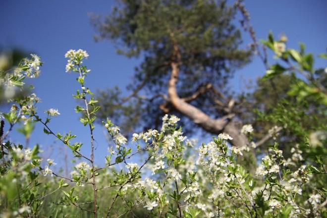 вишнева гора