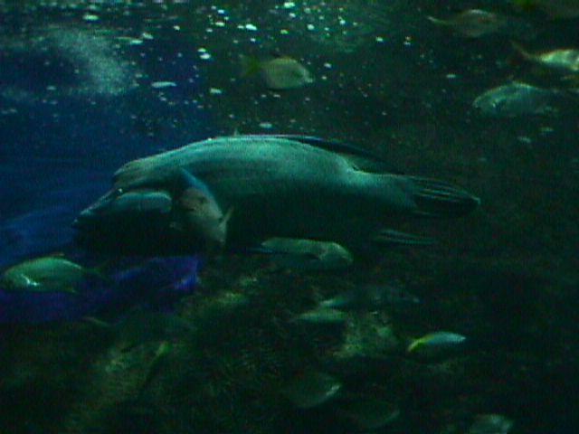 1070Aquarium Fish Schooling