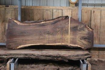 "551  Walnut -7 10/4 x  35"" x  24"" Wide x 8'  Long"