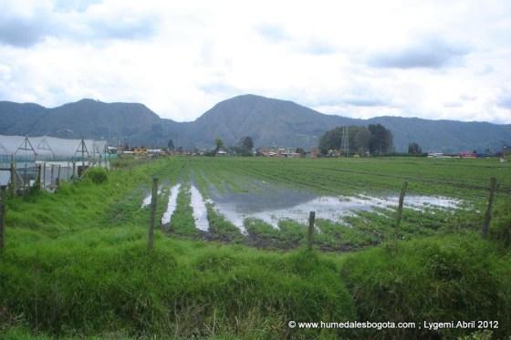 Cerro de Manjui. Izquierda: Granjas floricultoras. Cultivos anegados. Abril/12