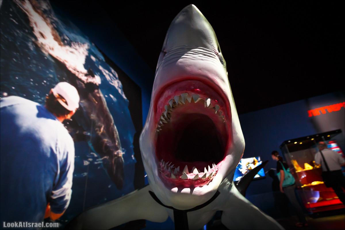 Выставка Мир Акул в Тель Авиве   Planet shark in Tel Aviv   תערוכה עולם הכרישים בתל אביב   LookAtIsrael.com - Фото путешествия по Израилю