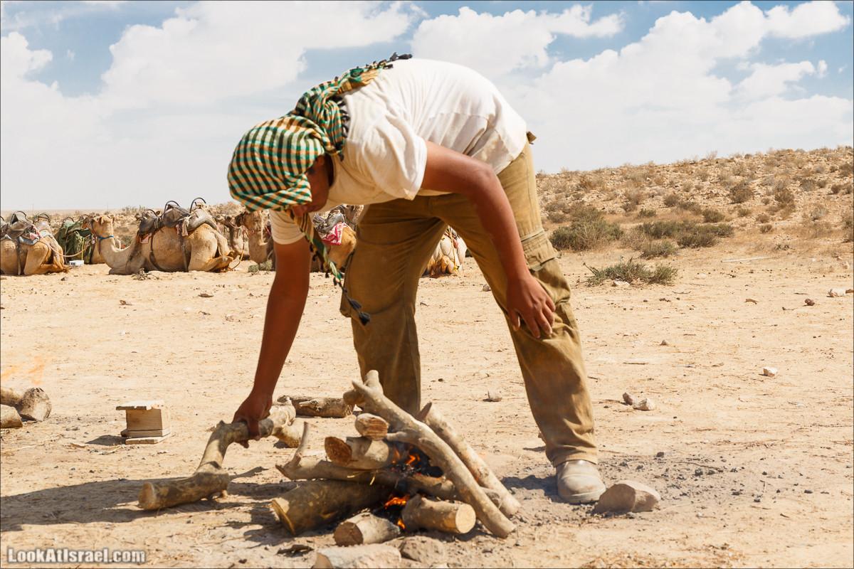 Путешествие на верблюдах по пустыне Негев | Desert trip on camels in Negev | LookAtIsrael.com - Фото путешествия по Израилю