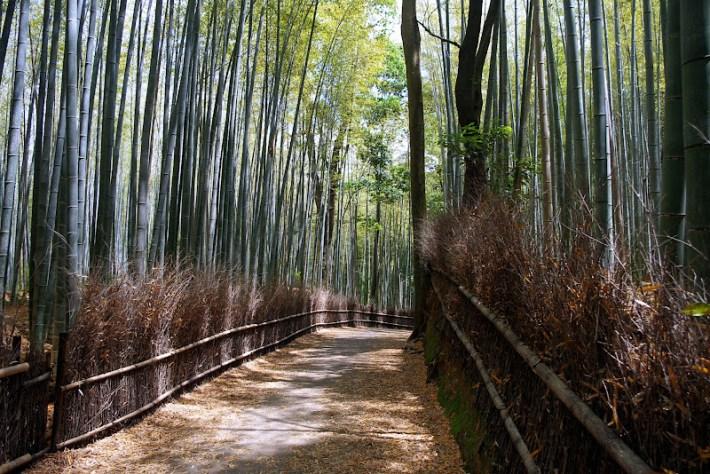 Qué ver en Kioto. Arashiyama