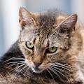 Pisicile din curte-8_web.jpg